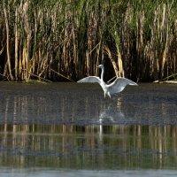 Жизнь на болоте :: Yuri Chudnovetz