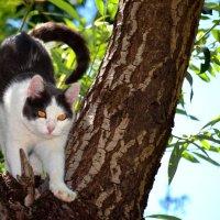 Кошачьи посиделки :: Артур Хороший