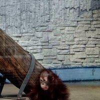 Дивная обезьянка. :: Антонина Гугаева