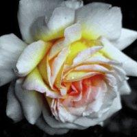 Пленяет красотой :: Nikolay Monahov