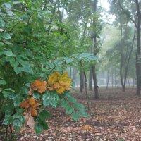 Лесной туман :: Novikov38 Новиков