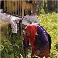 С утра полить огурчики..помидорчики..работы много..! :: Александр Шимохин