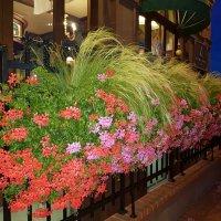 Цветы у дома :: Galina Solovova