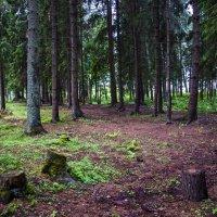 Валдайский лес :: Олег Oleg