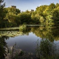 Карасёвое озеро в городе. :: Яков Реймер