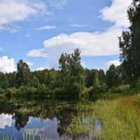 Лесное озеро :: Татьяна