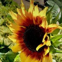 «Солнышко во дворе» :: VADIM *****