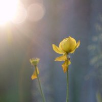 В лучах солнца.... :: Анна Суханова
