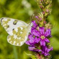 Бабочка и цветок... :: Наталья Меркулова
