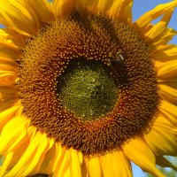 Яркое солнце августа. :: zoja