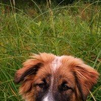 Собака(щенок)-улыбака. :: Марина Никулина
