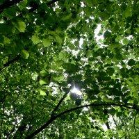 В лесу :: Евгений Верзилин