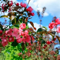Сияние Весны :: Vera Ostroumova