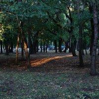 летний парк  тестирование объектива 16-50(2,8),снято с рук(ручной режим) :: Ирина ***