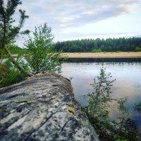 На реке :: Дима Валерич