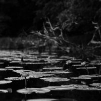 Islands roads :: The heirs of Old Delhi Rain