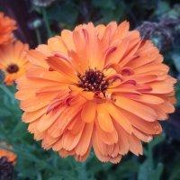 Оранжевое настроение :: Серж Поветкин