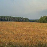 Поле пшеницы :: Алексей Сметкин