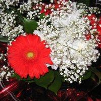 И ещё цветы :: Надежда