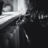 Кот на изоляции :: Елена Берсенёва