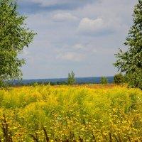 Полевые травы. :: Михаил Столяров