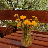 Солнечные цветы :: Наталья (D.Nat@lia)