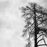 Мертвое дерево :: Дмитрий Соловьев