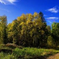 Золотая осень. :: Валерий Молоток