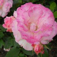 Цветок :: Lyudmila B