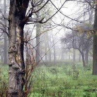 Fog :: Karina Andreeva