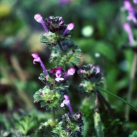 Flower :: Karina Andreeva