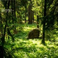 Лес в Гемании :: Андрей Протасевич