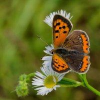 Бабочка :: Лариса Н