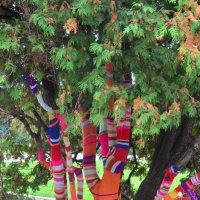 Нарядное дерево на Воробьевых горах :: Елена Данилина