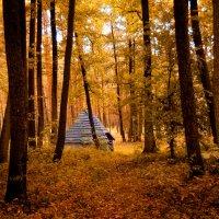 Лес Святогорский :: Аl Anis