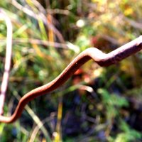 про змею :: Alexandr Shemetov