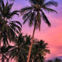 Purple sunset :: Igor Nekrasov