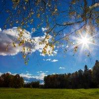 Осеннее солнце :: Ольга Соболева