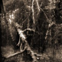 Дерево. Монокль :: Nn semonov_nn