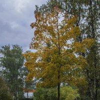 Осенний пейзаж :: Андрей Шаронов