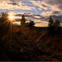 В лучах закатного солнца :: galina tihonova
