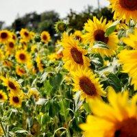 ...осколки солнечного дня.. :: Irina Bogatyreva