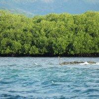 острова Флорес :: Yulia Golub