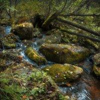 лесной ручеек :: Александр Иванов