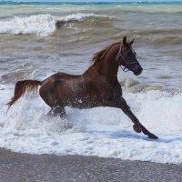 Бегущий по волнам :: Валерия заноска