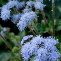 Голубой цветок. (Осень) :: Sergey Serebrykov