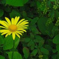 Цветы :: Владимир Мазур