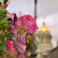 Петербург :: Екатерина Яковлева