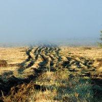 Туман на Ильчире II :: Владимир Сковородников