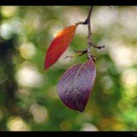Вот и осень..... :: Елена Kазак